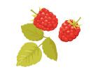 berry_s