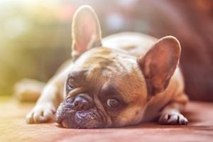 ペット用品の販売促進に動画広告を利用するメリット
